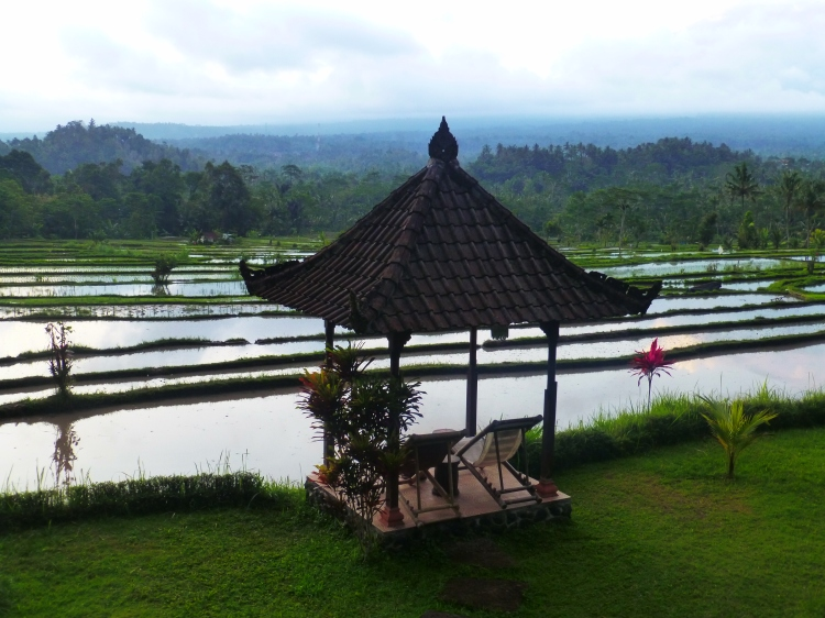 Rice fields_Munduk